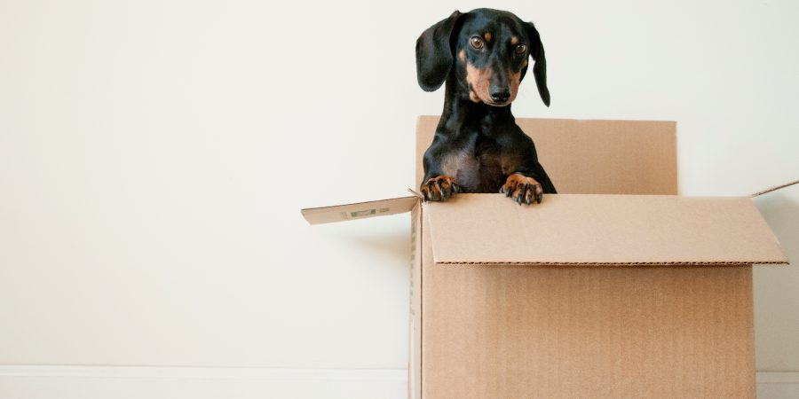 Things to know about moving insurance
