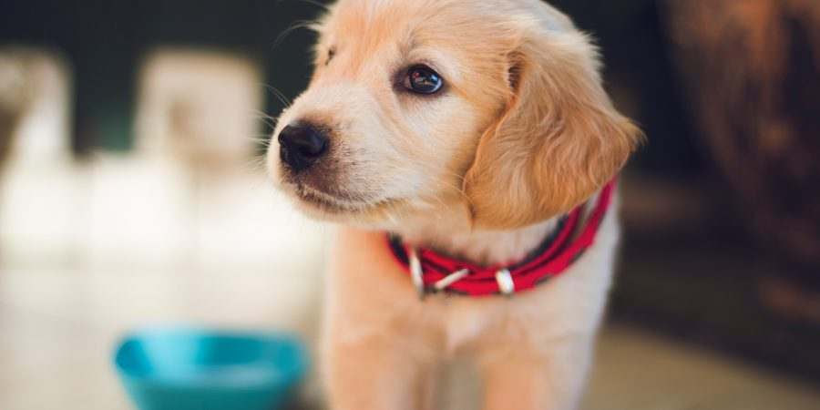 Thinking about insuring fido?