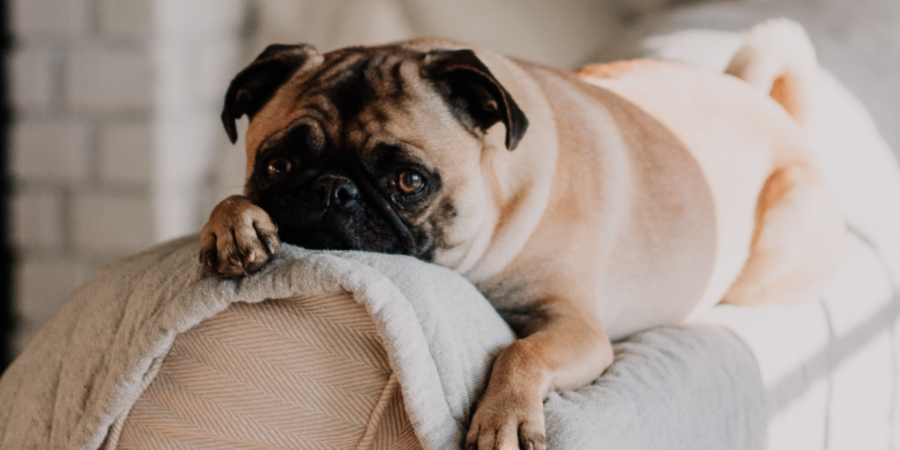 Renting with pets in BC